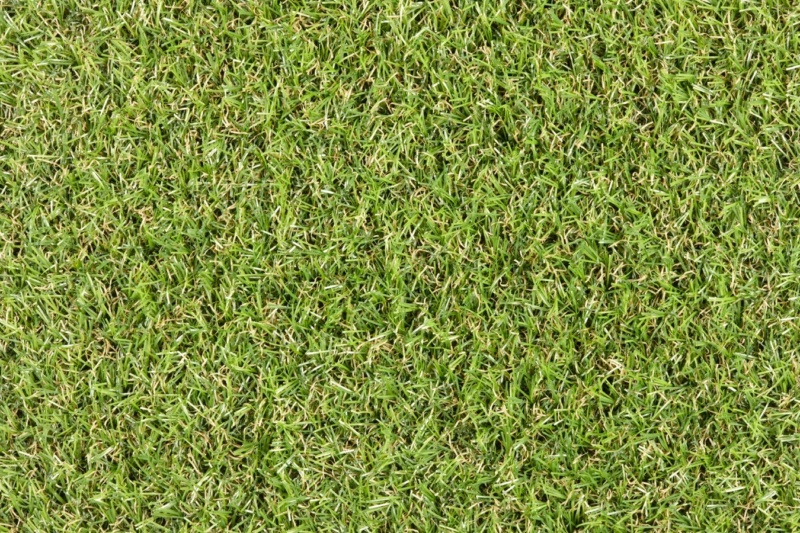 camellia artificial grass